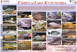 Fish of Lake Argyle